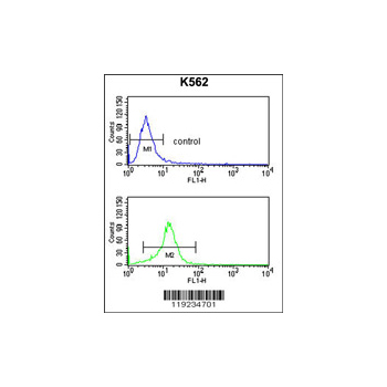 CRHR2 antibody - center region (OAAB03880) in K562 cells using Flow Cytometry