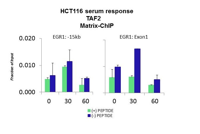 TAF2 antibody - middle region (ARP33392_P050) in HCT116 using CHIP